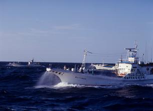 カツオ1本釣り漁の写真素材 [FYI03884313]