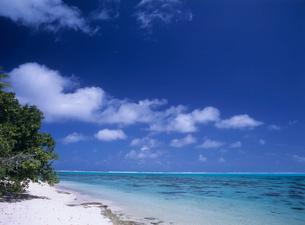 サンゴ礁の海と樹 タヒチの写真素材 [FYI03884409]