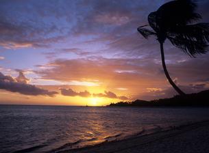 夕焼けのビーチとヤシの木 ボラボラ島の写真素材 [FYI03884453]