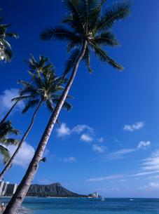 ワイキキビーチ ハワイの写真素材 [FYI03884649]