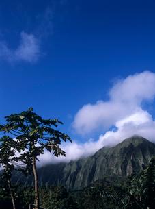 パパイアと山 オアフ島の写真素材 [FYI03884671]