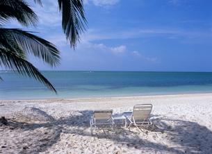 砂浜のヤシの木陰のデッキチェアの写真素材 [FYI03884779]
