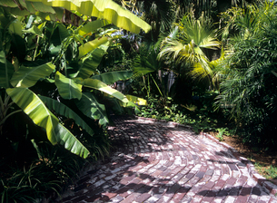 レンガ石の通路とバナナの木 キーウエストの写真素材 [FYI03884784]