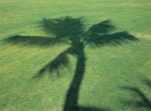 芝生の上のヤシの陰 フロリダの写真素材 [FYI03884834]