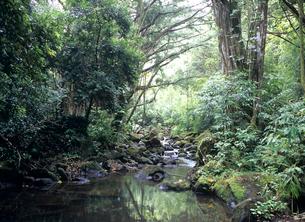 熱帯雨林 オアフ島の写真素材 [FYI03885065]