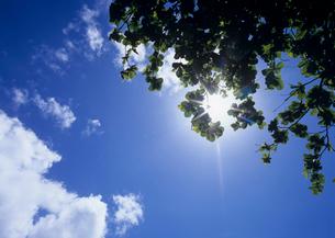 青空と木漏れ日と雲 オアフ島の写真素材 [FYI03885099]