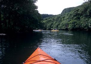 川を上るカヌー 西表島の写真素材 [FYI03885157]