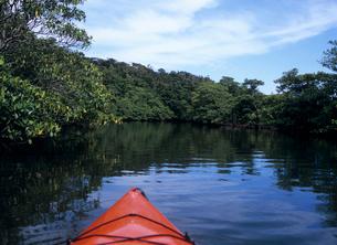 川を上るカヌー 西表島の写真素材 [FYI03885161]