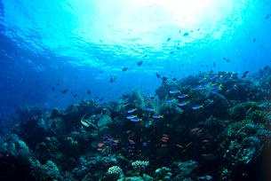 サンゴと魚群の写真素材 [FYI03885301]