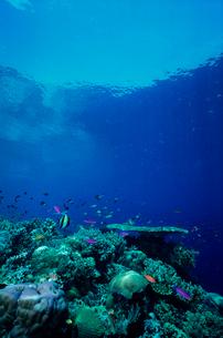 サンゴと熱帯魚の写真素材 [FYI03885473]