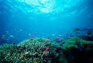 サンゴと熱帯魚の写真素材 [FYI03885477]