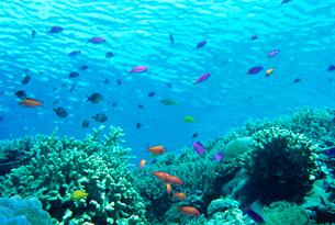 サンゴと熱帯魚の写真素材 [FYI03885478]