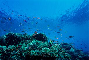 サンゴと熱帯魚の写真素材 [FYI03885479]