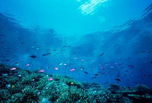 サンゴと熱帯魚の写真素材 [FYI03885481]