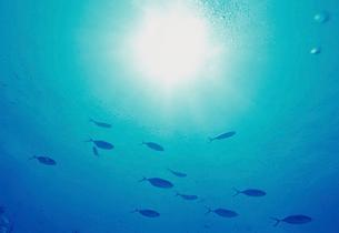 海中から見た太陽と魚の写真素材 [FYI03885485]