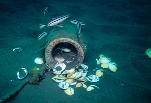 タコツボのまわりに散乱する貝殻とキュウセンの写真素材 [FYI03885713]