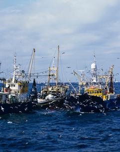 イワシの巻網漁 北海道の写真素材 [FYI03886346]