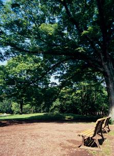 代々木公園 東京都の写真素材 [FYI03886501]