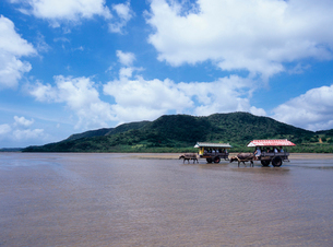 由布島に渡る水牛車 西表島の写真素材 [FYI03886686]