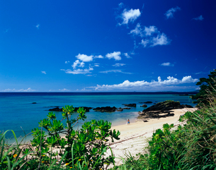 恩納村のビーチの写真素材 [FYI03886693]