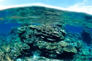 浅瀬のサンゴと青空  八重干瀬 宮古島の写真素材 [FYI03886703]