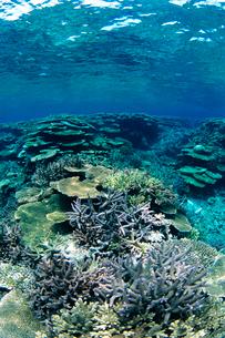 浅瀬のサンゴ  八重干瀬 宮古島の写真素材 [FYI03886704]