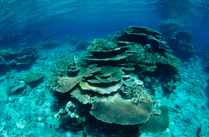 浅瀬のサンゴ  八重干瀬 宮古島の写真素材 [FYI03886707]