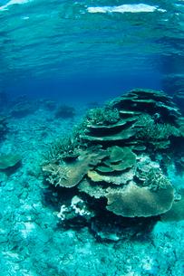 浅瀬のサンゴ 八重干瀬 宮古島の写真素材 [FYI03886709]