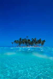 水中から見た島とヤシの木の写真素材 [FYI03886746]