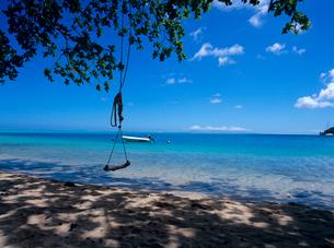 海辺の木陰のブランコの写真素材 [FYI03886834]