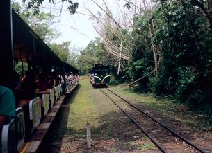 公園内の列車 イグアスの滝の写真素材 [FYI03886882]