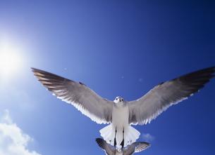 カモメと太陽の写真素材 [FYI03886946]