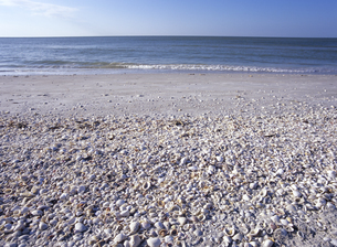 砂浜に打ち上がった貝殻の写真素材 [FYI03887044]