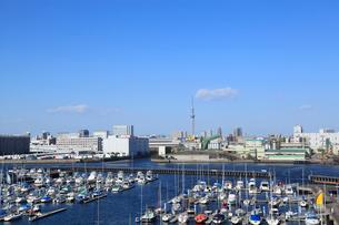 夢の島マリーナから見た東京スカイツリーの写真素材 [FYI03887489]