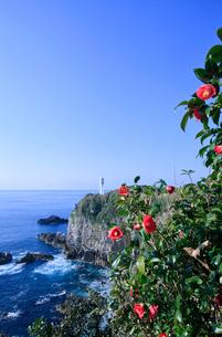 足摺岬と椿の写真素材 [FYI03887692]