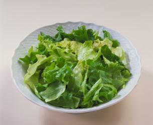 グリーンサラダの写真素材 [FYI03889972]