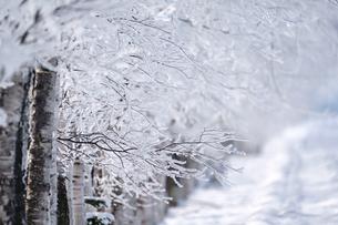 霧氷の写真素材 [FYI03897125]