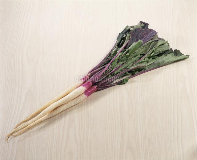 日野菜の写真素材 [FYI03904341]