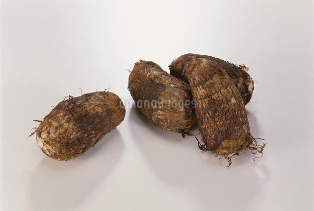 里芋(セレベス)の写真素材 [FYI03904380]