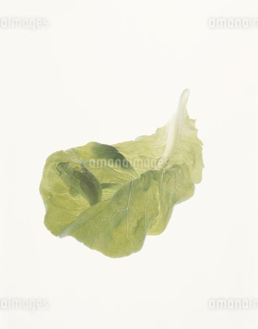 サラダ菜の写真素材 [FYI03904384]