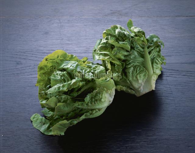 サラダ菜の写真素材 [FYI03904425]