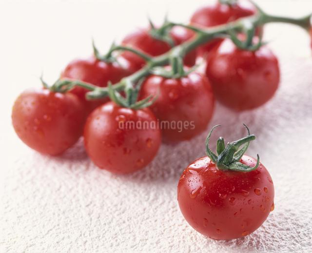 トマト(レッドパール)の写真素材 [FYI03904488]