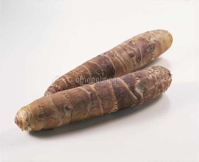 里芋(京芋)の写真素材 [FYI03904529]