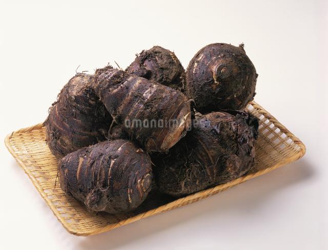 里芋の写真素材 [FYI03904537]