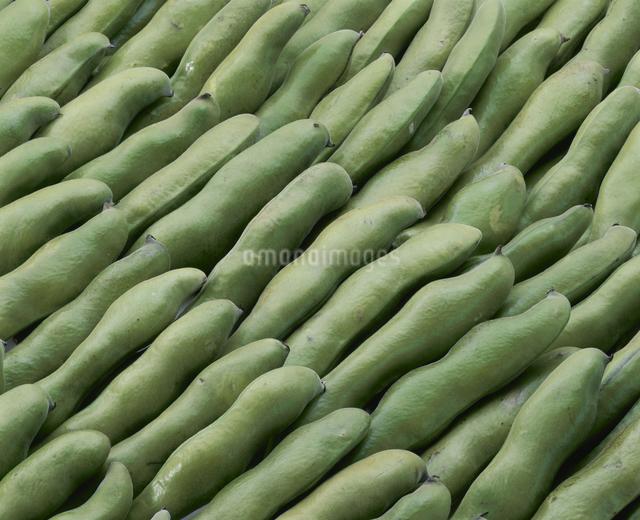 そら豆の写真素材 [FYI03904556]
