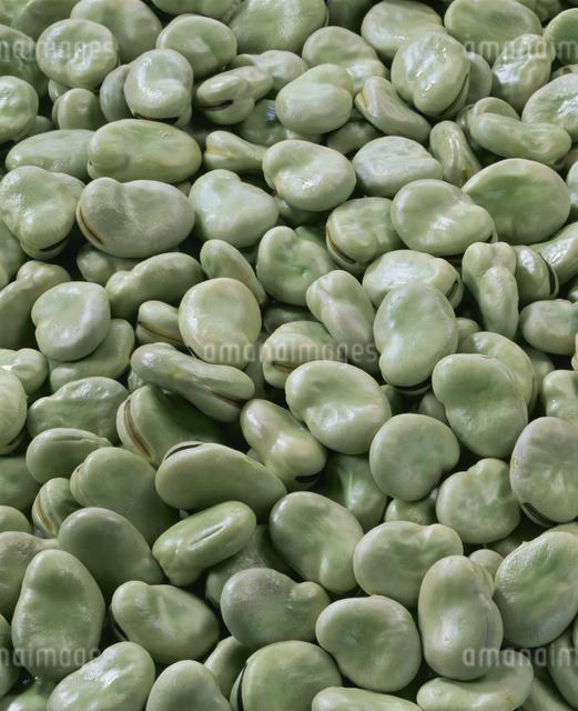 そら豆の写真素材 [FYI03904566]