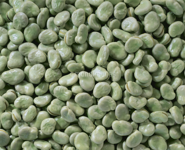 そら豆の写真素材 [FYI03904571]