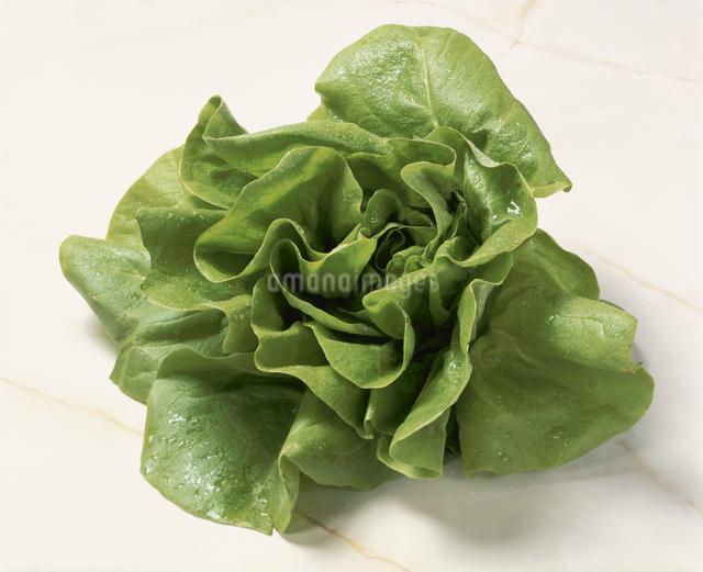 サラダ菜の写真素材 [FYI03904657]