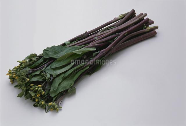 紅菜苔の写真素材 [FYI03904697]