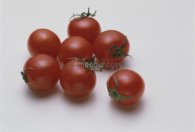 プチトマトの写真素材 [FYI03904731]